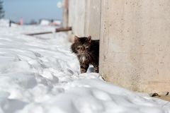 Tortured and listless cat peeks out from behind the concrete fence in winter.  Royalty Free Stock Photography