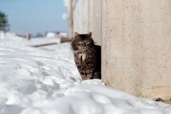 Tortured and listless cat peeks out from behind the concrete fence in winter.  Stock Image