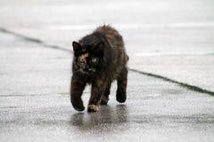 Torty katt på våt trottoar Arkivbilder
