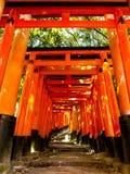 Torussenpoorten bij het heiligdom van Fushimi Inari Stock Afbeelding