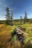 Torvmyr i Krkonose berg Royaltyfria Bilder