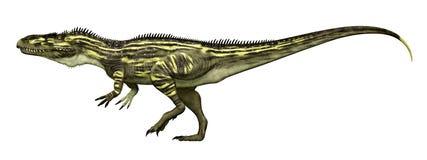 Torvosaurus del dinosaurio aislado en el fondo blanco imagenes de archivo