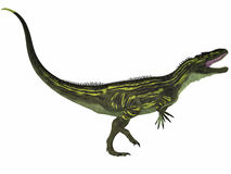 Torvosaurus on White Royalty Free Stock Photo