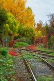 Tory szynowi wzdłuż kolorowych jesieni ulistnienia drzew Zdjęcie Royalty Free