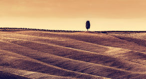 Toscânia coloca a paisagem do outono, panorama, Itália Estação da colheita Foto de Stock