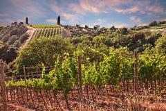 Toscânia, Itália: ajardine no por do sol dos montes com vinhedos Foto de Stock
