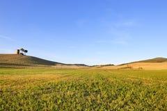 Toscânia, paisagem de Maremma. Torre, campo e árvores. fotos de stock