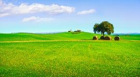 Toscânia, paisagem rural Árvore, rolos do feno e fileds verdes ital Fotos de Stock Royalty Free