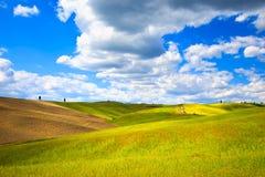 Toscânia, terra, árvores de cipreste, trigo e campos verdes Pienza Fotos de Stock Royalty Free