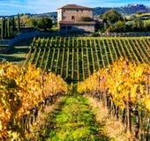 Toscânia tradicional - cenário com vinhedos do outono Italy fotografia de stock royalty free