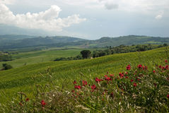 Toscaans landschap in de lente Stock Fotografie