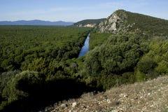 Toscaans landschap met clusterpijnbomen Stock Foto