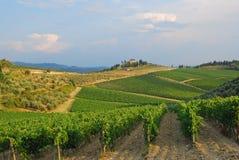 Toscaans landschap met wijngaarden Royalty-vrije Stock Fotografie
