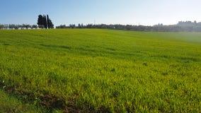 Toscaans platteland: Groene weiden in de lente met cipressen en olijfbomen royalty-vrije stock afbeeldingen