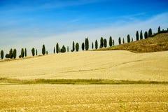 Toscaans Platteland met Cipresbomen op een rij Stock Afbeelding