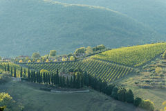 Toscaanse hellingswijngaard de vroege herfst met huizen Stock Afbeelding