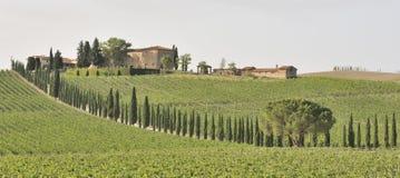 Toscaanse wijngaard royalty-vrije stock fotografie