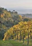 Toscaanse Wijngaard in de Herfst stock foto's