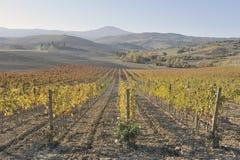 Toscaanse Wijngaard in de Herfst stock foto