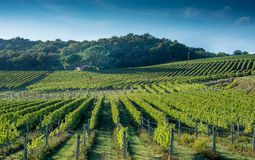Toscaanse wijngaard de vroege herfst met kleine steenhut royalty-vrije stock foto