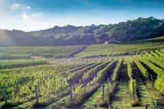 Toscaanse wijngaard de vroege herfst met kleine steenhut 2 royalty-vrije stock foto