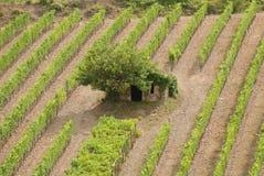 Toscaanse wijngaard met plattelandshuisje royalty-vrije stock afbeelding