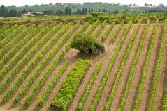 Toscaanse wijngaard met plattelandshuisje stock fotografie