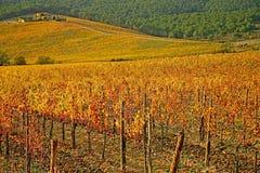 Toscaanse Wijngaarden Stock Afbeelding