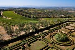 Toscaanse wijngaarden en olijfbomen Royalty-vrije Stock Foto's