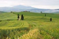 Toscana, árboles de ciprés con la pista Imagen de archivo libre de regalías