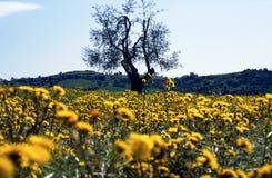 Toscana Imagenes de archivo