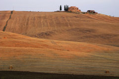 Toscana. Italy, Tuscany, wheat field Royalty Free Stock Photos