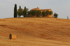 Toscana. Italy, Tuscany, wheat field in tuscan landscape Stock Photography