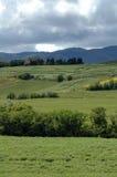 Toscana en vertical Fotografía de archivo