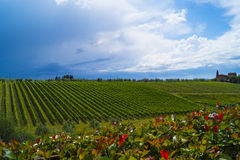 Toscana landscape. Tenuta del Palagio, wineyard in Toscana, Chianti valley Royalty Free Stock Photography