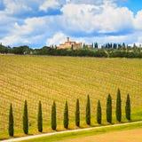 Toscana, viñedo, árboles de ciprés y camino, paisaje rural, Ital Fotos de archivo