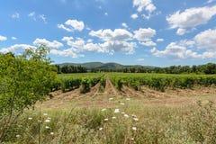 Toscana vineyard Royalty Free Stock Image