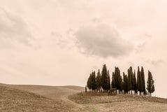 Toscanië - Cipresheuvel Stock Foto's