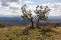 Toscanië - de Broer Trees royalty-vrije stock afbeelding