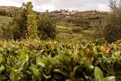 Toscanië - de Stad van de Heuveltop van Mantalcino royalty-vrije stock foto's