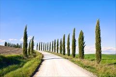 Toscanië, de weglandschap van de Bomen van de Cipres, Italië. Stock Afbeeldingen