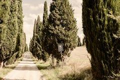 Toscanië een Typische Cipres Gevoerde Weg of een Strada Bianca Stock Afbeelding
