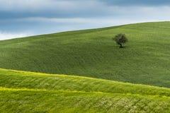 Toscanië, essentieel landschap royalty-vrije stock foto