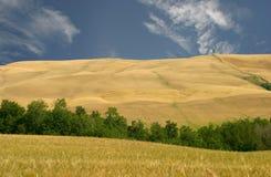 Toscanië, Heuvels van het gebied van Le Kreta stock afbeeldingen