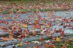 Toscanië, Italië, esdoornbladeren in de herfstkleuren gevallen op een straat in een stadspark stock fotografie