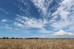 Toscanië, landschap, Italië Royalty-vrije Stock Afbeelding