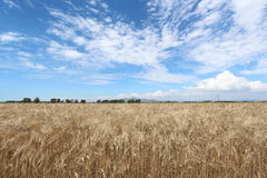 Toscanië, landschap, Italië Royalty-vrije Stock Fotografie