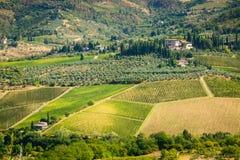 Toscanië. Wijngaard Stock Afbeeldingen
