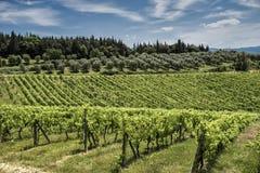 Toscany Stockfoto