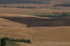 Toscany fields in summer Stock Photos